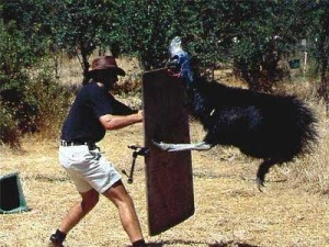 cassowary